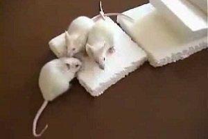 Как защитить пенопласт от мышей и других грызунов