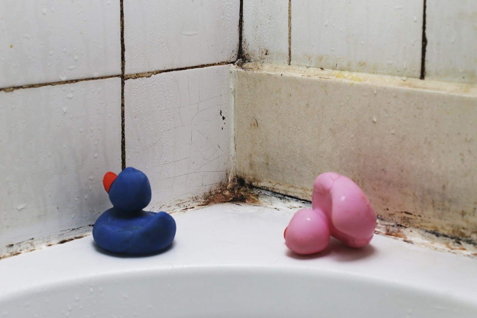 Как избавиться от плесени в ванной: видео