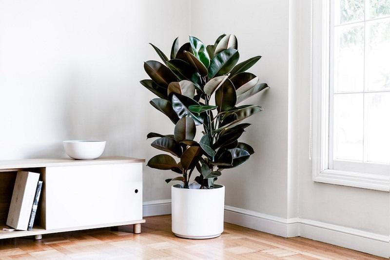 10 комнатных растений для спальни, которые помогут расслабиться и крепче спать