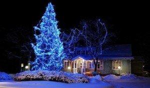 Освещение деревьев дюра-лайтом